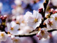 В Крым пришла весна