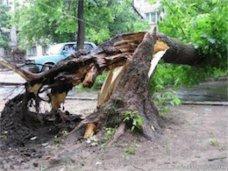 На жительницу Джанкоя упало дерево
