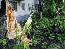 В Симферополе сильный ветер повалил 20 деревьев