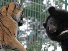 Под Севастополем планируется открыть парк медведей и тигров