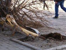 Ночью в пешеходной зоне Симферополя сбили мужчину