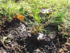В Евпатории заложат сосновую аллею