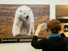 В Севастополе проведут фотовыставку «Дикая природа России»