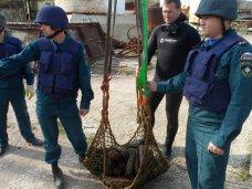 В Севастополе нашли 145 снарядов времен войны