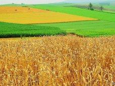 В Крыму будут наказывать за нецелевое использование земель