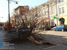 На водителя, сбившего клен в пешеходной зоне в Симферополе, подадут в суд