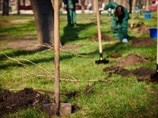 В Симферополе пройдет акция по высадке деревьев