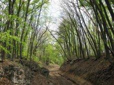 В Крыму временно введен запрет на въезд в лес на автомобиле