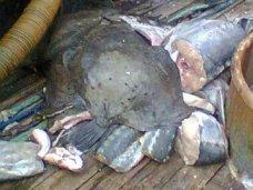 В Керчи задержали группу браконьеров