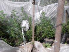 В Кировском районе выявили шесть фактов незаконного оборота наркотиков