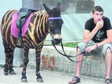 В Крыму появится закон о запрете использования животных в коммерческих целях