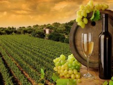 Крымские виноделы подготовят законопроект о вине