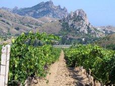 Информация о гибели виноградников в Крыму не соответствует действительности