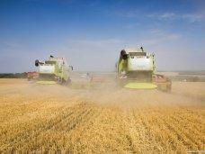 В Крыму ранние зерновые начнут убирать в конце июня