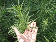 Житель Сакского района попался на хранении наркотиков