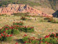 Собственники парка в урочище Кизил-Коба незаконно изменили ландшафт
