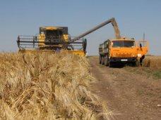 В Крыму планируют собрать 960-980 тыс. тонн ранних зерновых