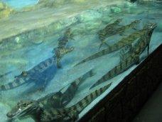В День защиты детей юные крымчане смогут бесплатно посетить крокодиляриум и аквариум