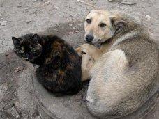 В крымском законе о животных восполнят пробелы российского законодательства