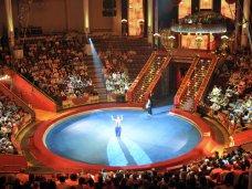 В Ялте состоится премьерное выступление Московского цирка