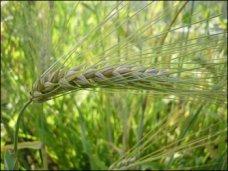 Сельхозпредприятия Крыма завершили сев яровых и обработали озимые культуры