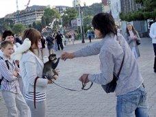В Алуште введен мораторий на проведение мероприятий с использованием животных