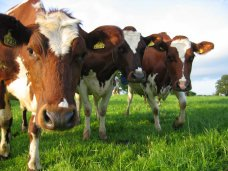 Крыму и Севастополю выделили субсидии на поддержку растениеводства и животноводства