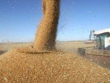 В Крыму намолочено 78,8 тыс. тонн зерна
