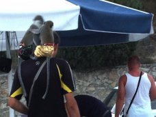 В Алуште выявлен факт предоставления фотоуслуг с животными