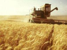 В Крыму урожайность зерновых выросла в 2,5 раза