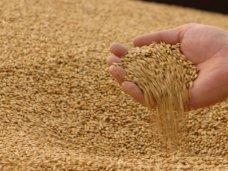 Крымским аграриям не стоит отказываться от украинского рынка сбыта