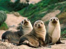 В крымском «Тайгане» появилось три тюленя
