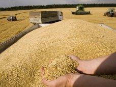 У крымских аграриев возникают проблемы с экспортом зерна, – министр