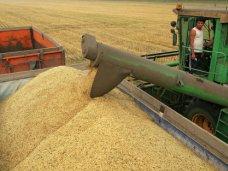 Крым экспортировал 27 тыс. тонн ячменя