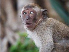 В Севастополе обезьяна убила ребенка