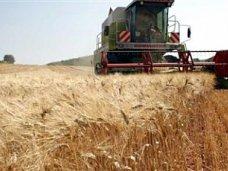 В Крыму урожайность зерновых составит 23 центнера с гектара