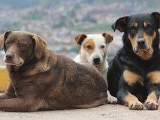 В Ялте начался  отлов бродячих собак