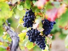В Крыму до 2017 года на развитие садоводства и виноградарства предусмотрят 12 млрд. рублей