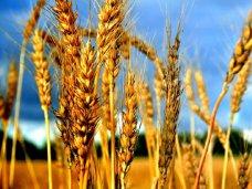 В Крыму завершили уборку ранних зерновых