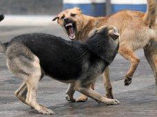 В Алуште бродячие животные стали чаще кусать людей