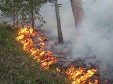 С начала года в Ялте 15 раз тушили лесные пожары