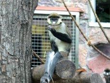В Севастополе полицейские изъяли животных из частного мини-зоопарка