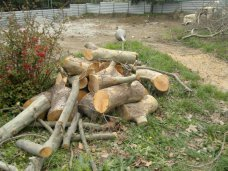 В Алуште расторгнут договор с застройщиком, вырубившим деревья в парке