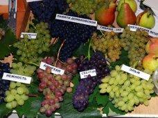 В Алуште проходит выставка-продажа винограда