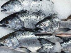 В Крым не пустили 70 тонн рыбы неизвестного происхождения
