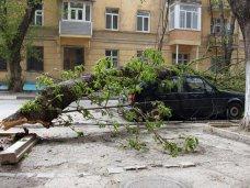 Алушту очистят от разросшихся деревьев