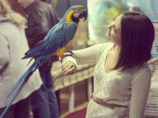 В Керчи проведут выставку птиц
