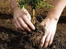 В Бахчисарайском районе проведут праздник посадки деревьев