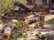 В Крыму запрещено рубить деревья