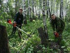 В Симферополе отметили день работников леса